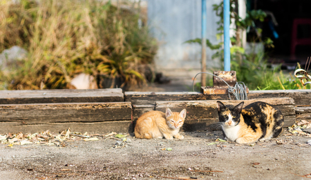 cowering: stray cat in morning light on ground