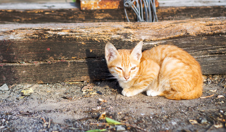 cowering: close up stray cat in morning light Stock Photo