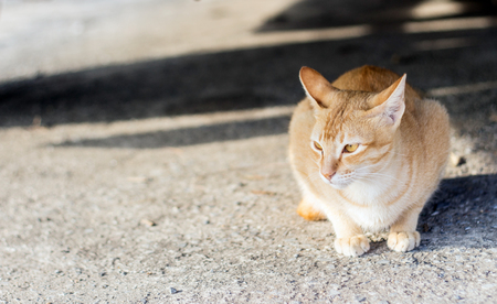 cowering: close up stray cat under car shadow in morning