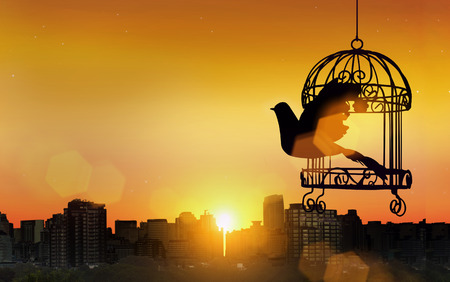 silhouette bird go out of cage in freedom concept in sunset Stock Photo