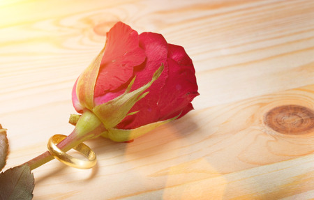 close up rose flower with ring for marry relationship with love in valentine day on wood background