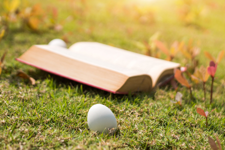 select focus egg on old book in history of easter concept outdoor park