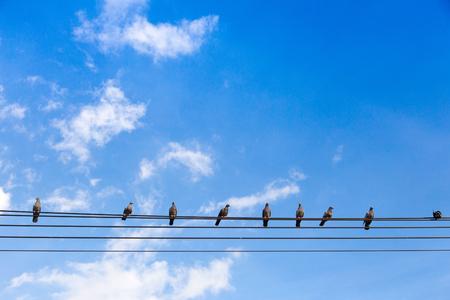 Vögel Sitzen Auf Stromleitungen über Klaren Himmel. Lizenzfreie ...