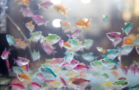 mini fish swimming in aqurium for background