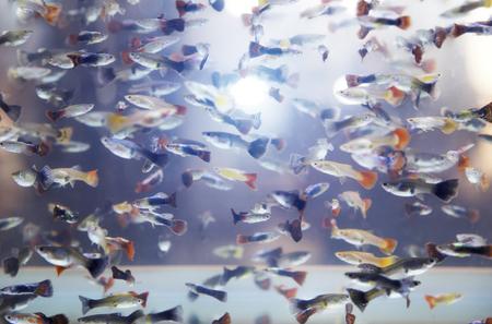 mini fish swimming in aqurium for background