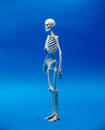 calcium human bone on blur color background in healthy concept