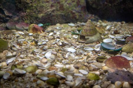 die shell in saltwater colored coral aquarium wildlife