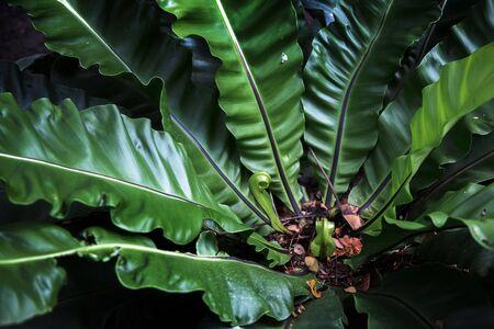 big green tropical jungle tree plant in forest for nature background  Reklamní fotografie