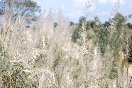 white high grass on windy day in winter season beauty in nature concept Foto de archivo - 132050005