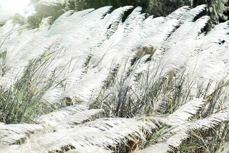 white high grass on windy day in winter season beauty in nature concept
