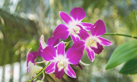close up purple orchid flower in garden 版權商用圖片