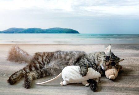 sleeping funny cat on wood floor on ocean beach with sun glasses in summer