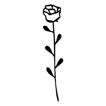 Black and white hand-drawn rose on a white background. Vector.