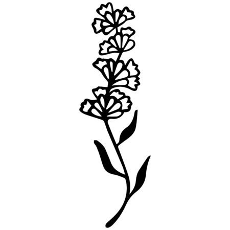 Black-white lavender flower hand-drawn. Isolated item for coloring. Vector.