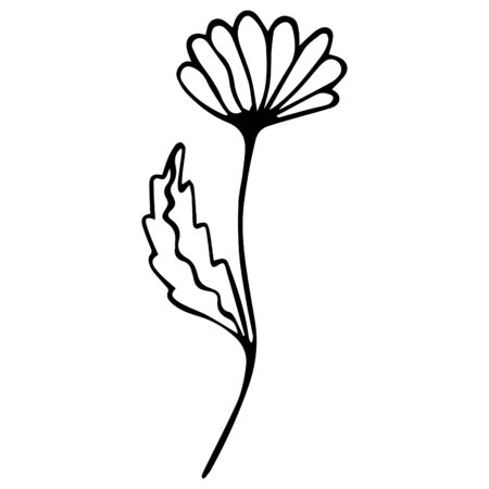 Black white camomile flower isolated. Hand-drawn item for coloring. Vector. Illusztráció