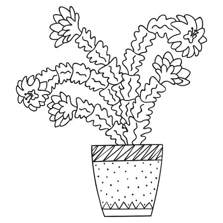 Black and white blooming Schlumberger in a pot. Isolated brazilian cactus. Doodle for the botanical coloring book. Vector.