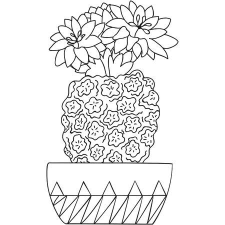 Black and white flowering Turbinicarpus with blossoming flowers in a pot. Cactus isolated. Botanical doodle for coloring book. Vector. 일러스트