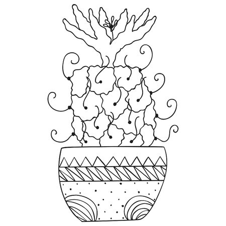 Black and white succulent Turbinicarpus macrochele with a flower on top in a pot. Cactus with long thorns. Isolated tropical houseplant for coloring book. Vector. 일러스트