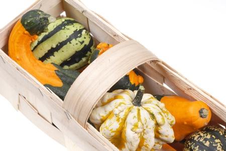 beautiful decorative pumpkins photo