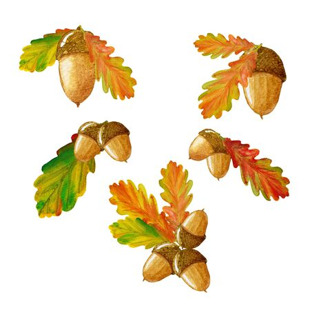 Set of watercolor hand painted oak acorn nuts and oak leaves. Perfect for wrapping paper, wallpaper, textile. Autumn season. Stockfoto