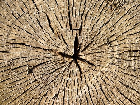 Tree trunk with clear annual rings - wood texture closeup Stock Photo