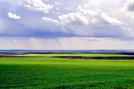 Rural landscape in spring with fields of green corn and dramatic sky