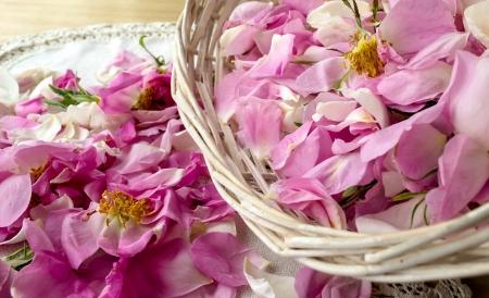 Dispersés pétale rose rose bulgare oléagineuse