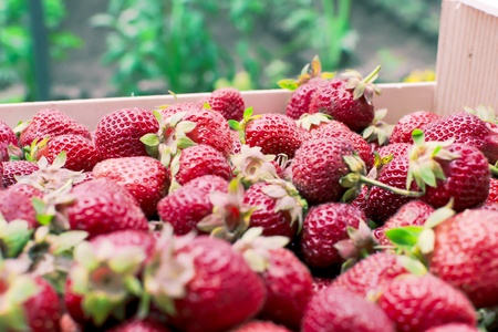 Bunch of fresh strawberries - closeup Stock Photo - 13966337