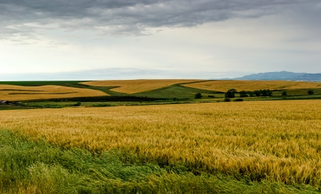 Landscape composed of a barley field in the foreground Stock Photo - 20215812