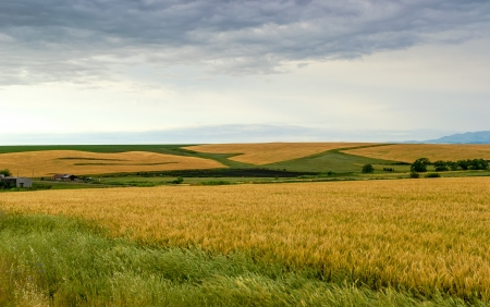 Landscape composed of a barley field in the foreground Stock Photo - 20215750