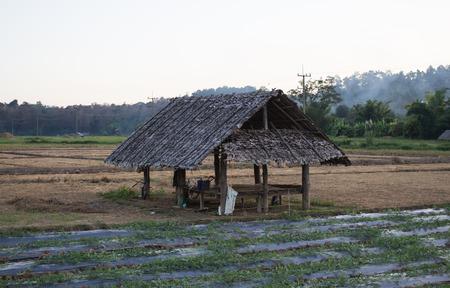 feild: natural feild at north of thailand Stock Photo