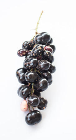 black berry: Black berry fruit on white background