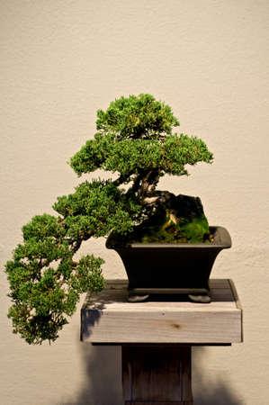 Bonsai Foto de archivo - 13070857