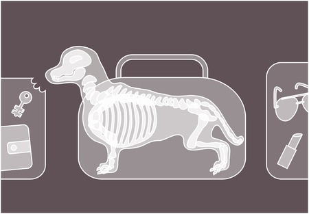 under control: Dog chewing luggage under xray on security control.
