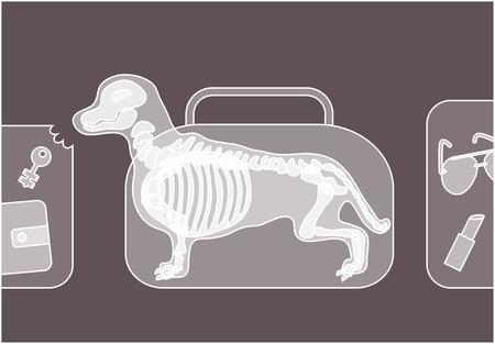 Kauwen van de hond bagage onder röntgenstraal op veiligheidscontrole.