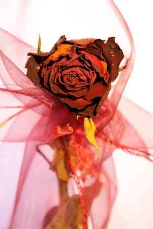 Beautiful dry red rose from front with decoration isolated on white background Imagens