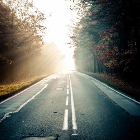 Bos weg in de mist. Zonnestralen door de mist. Stockfoto