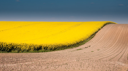 Canola field with blue sky and brown ground in wave shape