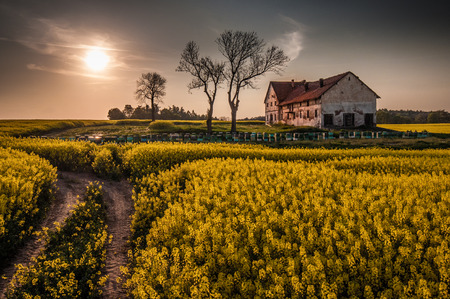 devastated land: Old devastated farm building with hives on the canola field Stock Photo