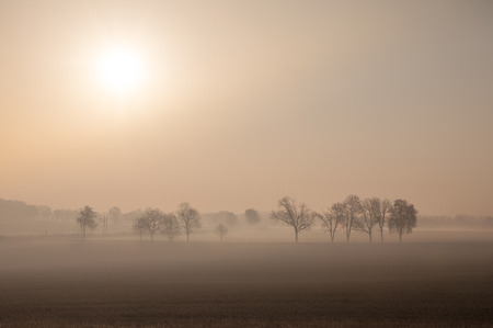 Misty morning with direct sunrise and couple of trees