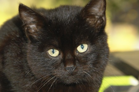 Black look of Cat eyes Stock Photo