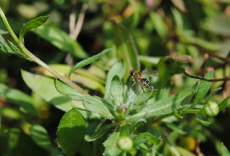 sector: Insect rare flys sort of field, rural sector. Lodging house in green sheets