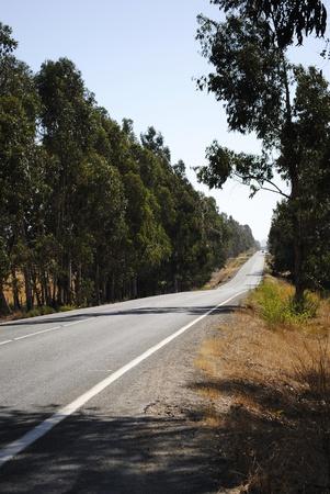 camino: Carretera rural con arboles de eucalipto, camino de asfalto. Stock Photo