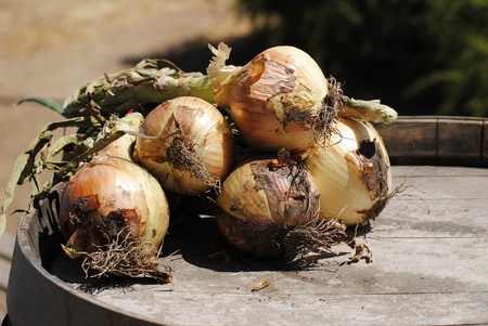 set of onions on a wooden barrel photo