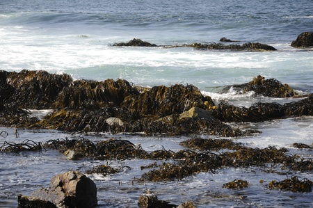 arises: Landscape of sea, rocks, and algae Stock Photo