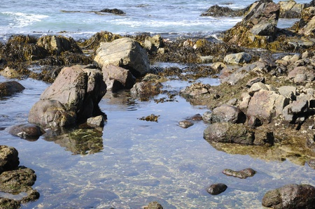 arises: Landscape of sea, sky, rocks, and algae