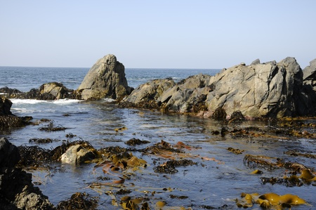 Landscape of sea, rocks and seaweed
