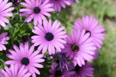 magenta flowers: Magenta flowers, spring garden