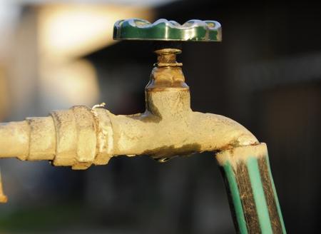 Faucet garden