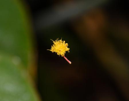 Kleine gele bloem in spinnenweb